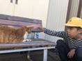 児童デイおそごうから「日常風景①~猫~」の報告です。