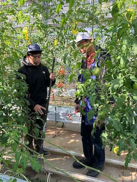 井出農園トマト