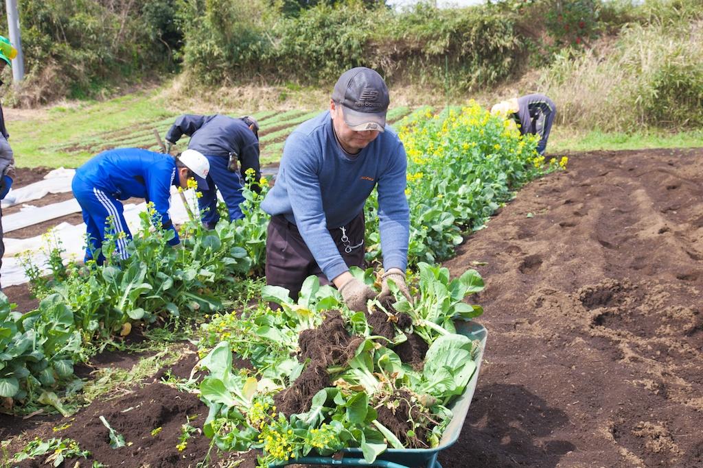農園での野菜の収穫写真